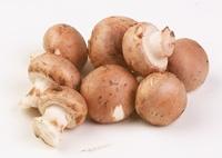 Barna champignon gomba, bio (DE) (500g)