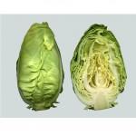 Fejes káposzta (Spitzkohl), új termés, kúp alakú, bio (IT) (cca. 400 - 600g / db)