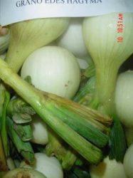 Salátahagyma, édes, Grano, bio (HU)