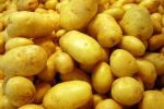 Burgonya, sárga, bio (HU)