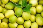 Citrom, Interdonato, sárga-zöld, bio (GR)  - Lot: 4005