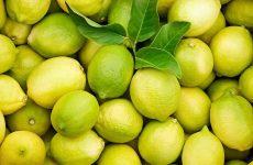 Citrom, Verdello, sárg-zöld, bio (IT) - CH-0403080