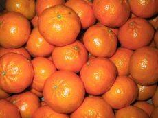 Mandarin, Nova, bio (IT) - CH - 0383742