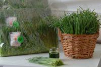 Friss tönköly búzafű, bio, Bio Háló (200g)