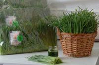 Friss tönköly búzafű, bio, Bio Háló (400g)