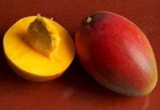 Mangó, Keith, nagy méret, bio (ISR) (500-600 g/db)